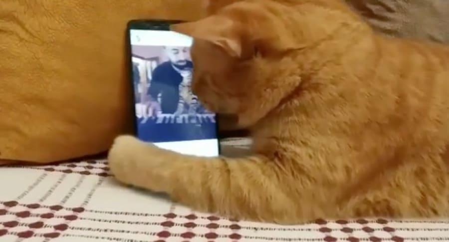 Gato ciego escuchando a un pianista. Pulzo.