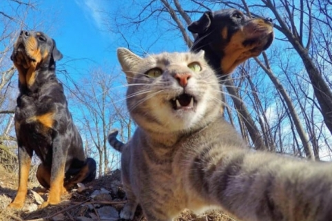 Gato que toma selfies. Pulzo.