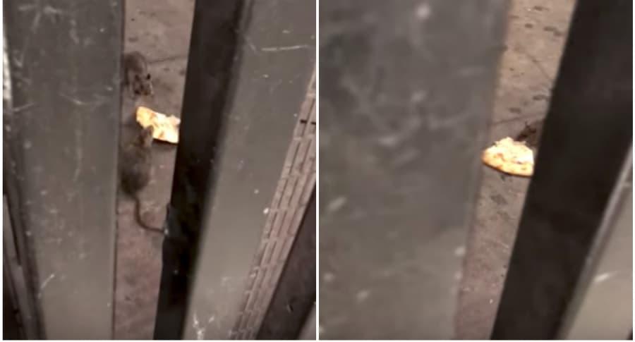 Pelea de ratas por pizza en el metro de Nueva York. Pulzo.