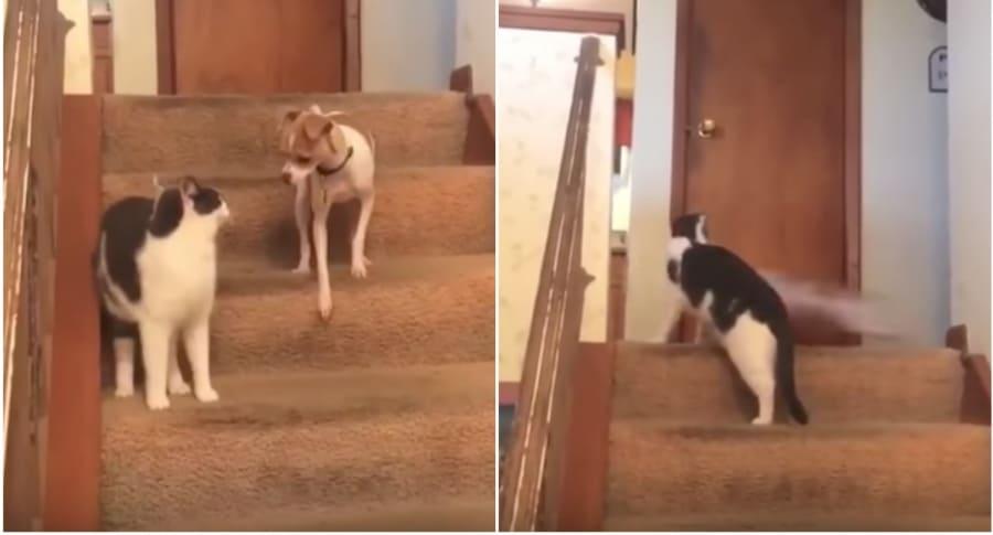 Gato y perro, que se hizo viral por correr rápidamente en una casa. Pulzo.