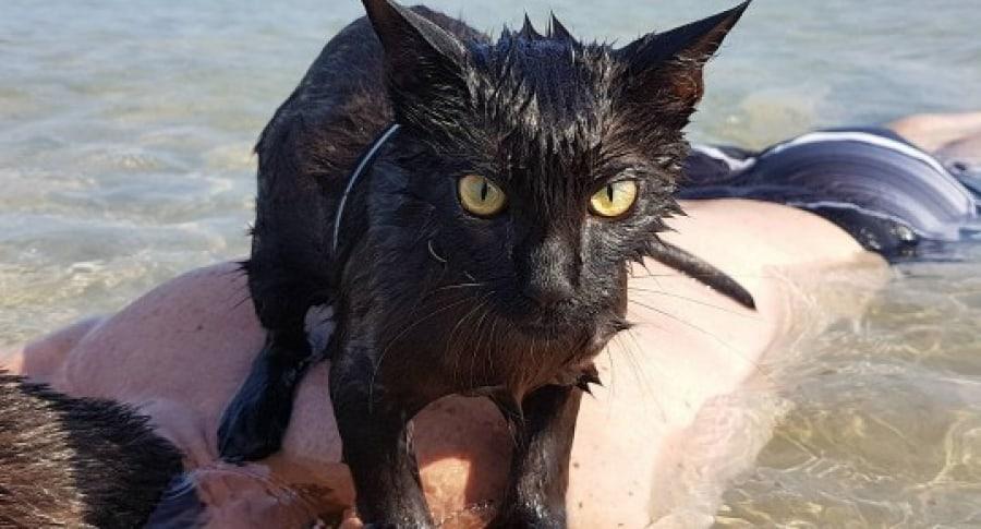 Nathan, la gata a la que le gusta nadar en la playa. Pulzo.