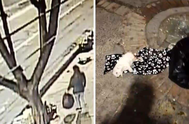 Investigan el caso de maltrato animal