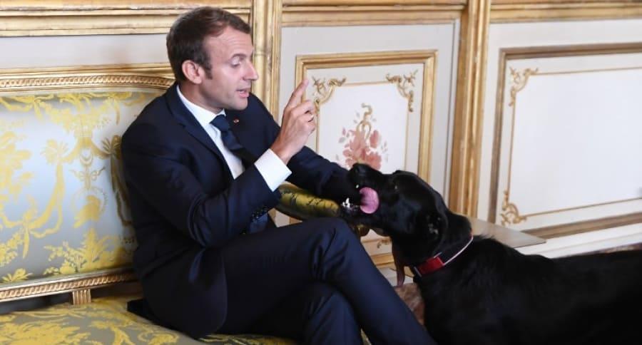 Emmanuel Macron y su perro Nemo