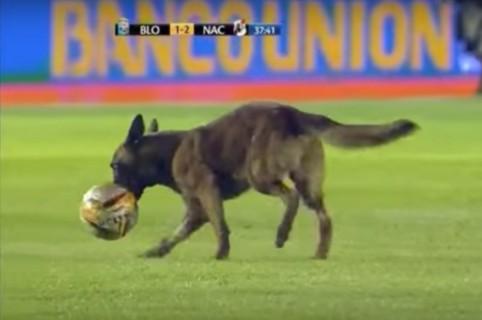 Perro Perrito que se coló en partido de fútbol boliviano. Pulzo.