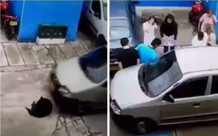 Momento en el que el conductor atropella al canino