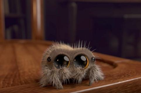 Araña animada Lucas. Pulzo.