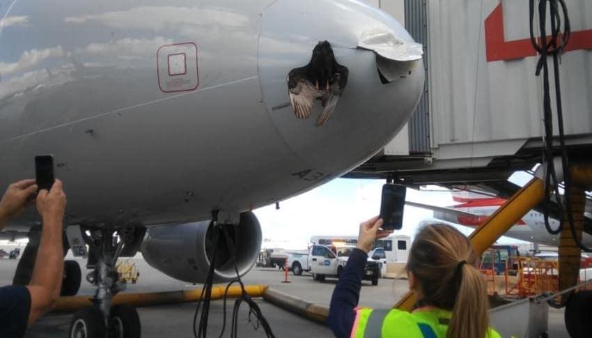 Pájaro golpea avión de American Airlines aterrizando en Miami