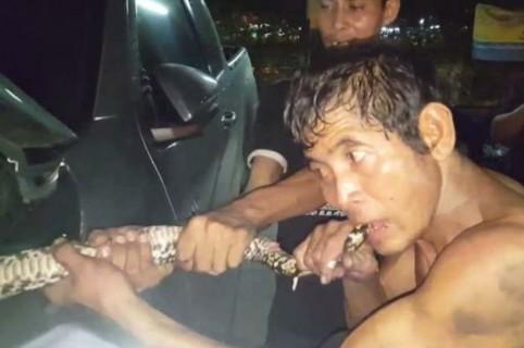Hombre muerde la cola de una serpiente pitón.