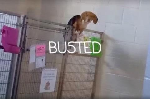 Perra que intentó escapar de refugio animal. Pulzo.