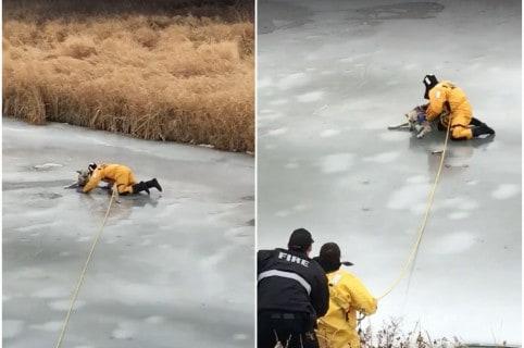 Bombero rescata a perro de arroyo congelado en Canadá. Pulzo.com
