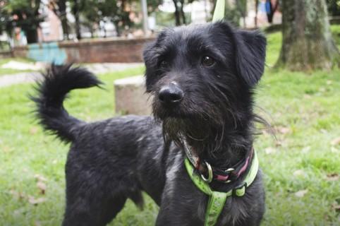 Jornada de adopción Bogotá