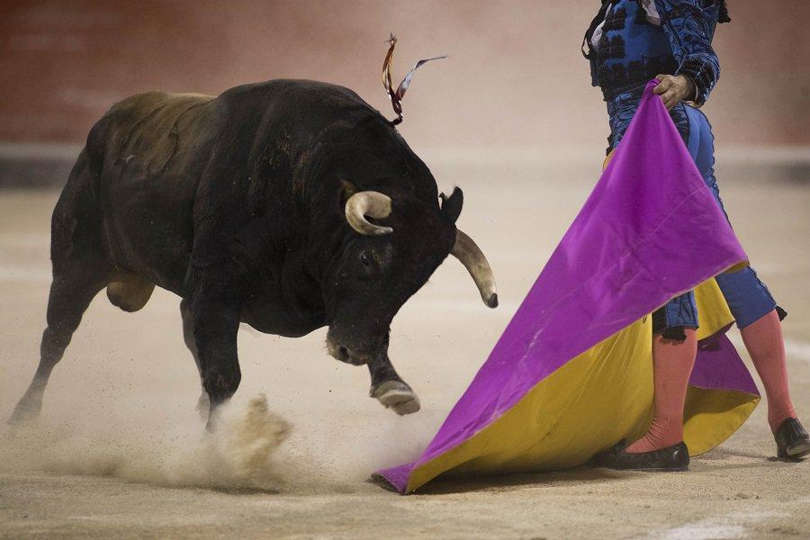 Toro en corrida