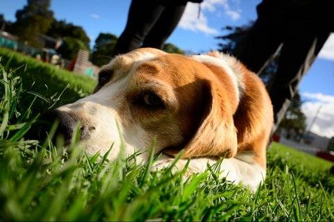 Perros abandonados en el municipio de Mosquera