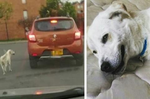 El perro abandonado fue rescatado por una nueva familia