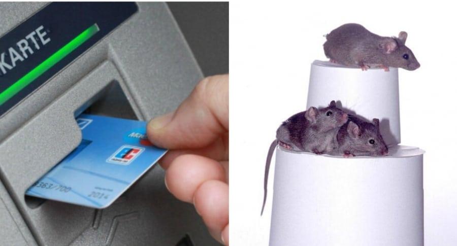 Hombre utilizando un cajero, y un grupo de ratones. Pulzo.