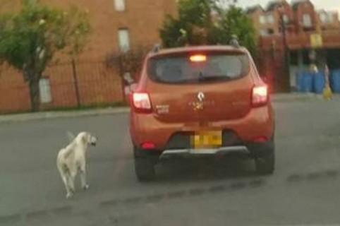 Perro y carro