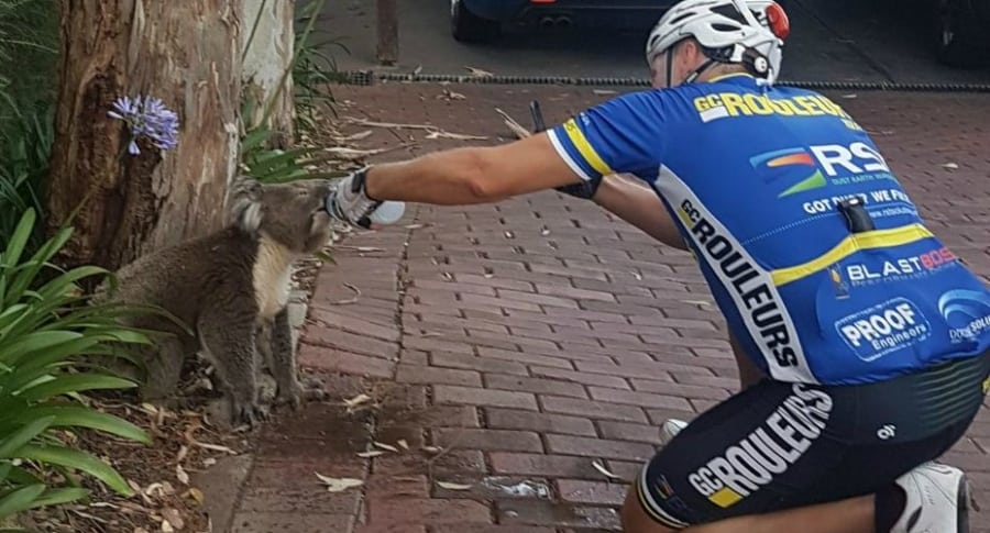 Ciclista le de agua a koala.