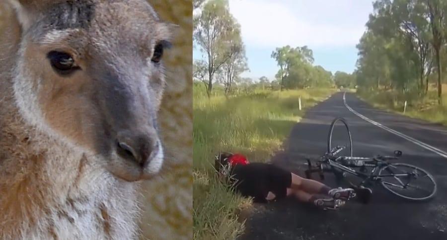 Canguro / ciclista
