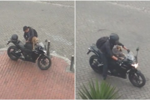 Perro acompaña a su dueño en una motocicleta en Bogotá. Pulzo.
