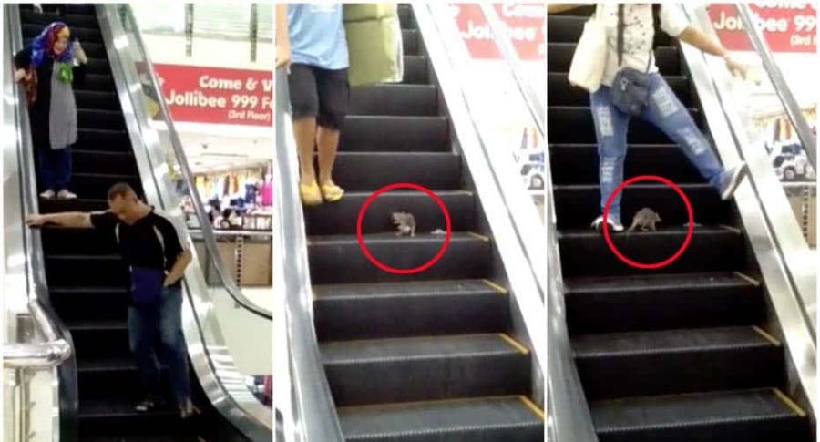 Rata en centro comercial.