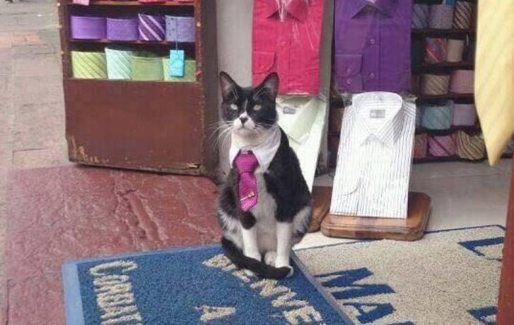 Gato encorbatado