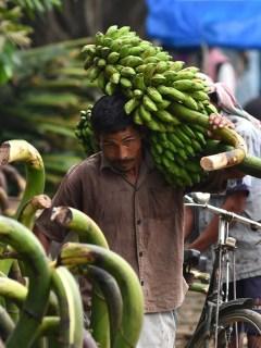 Trabajador bananero