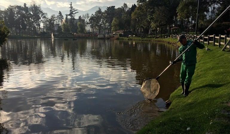 Lago del Parque de Los Novios en Bogotá