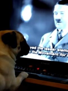 Perro aprende a ser nazi.