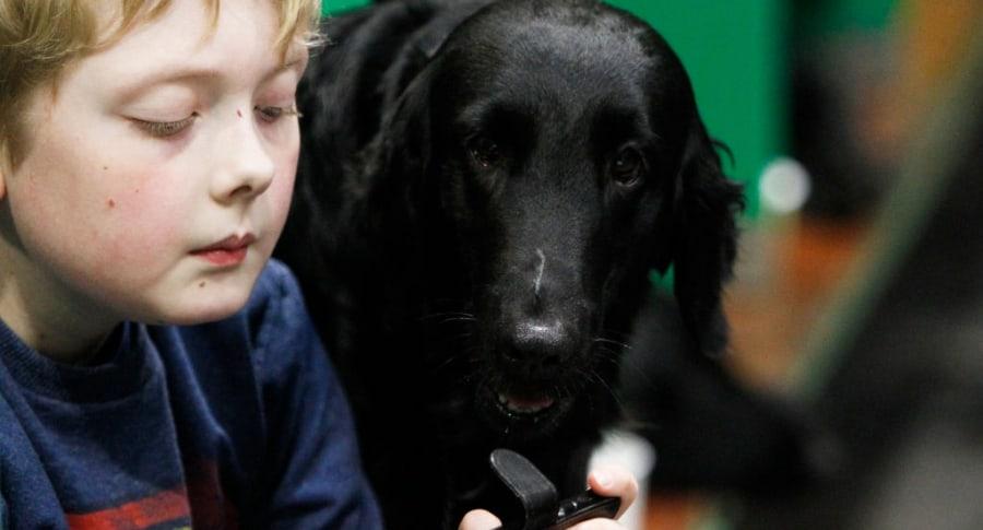 Niño jugando videojuegos con perro al lado