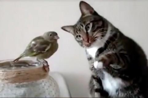 Gato acariciando pájaro