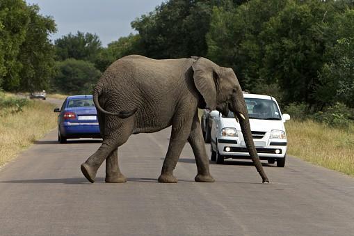 Elefante en carretera