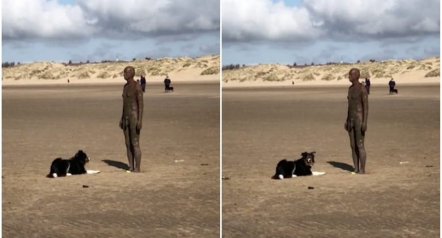 Perro intenta jugar con una estatua.