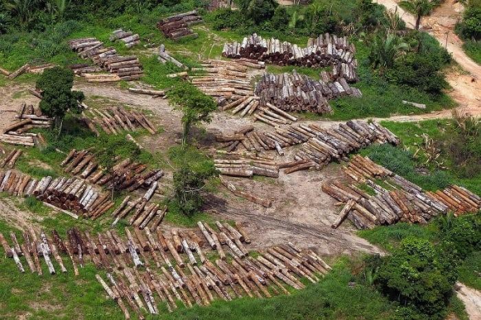 Árboles talados en Amazonas