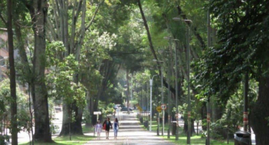 Árboles de la calle 92