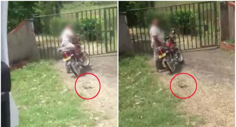 Motociclista arrastra zarigüeya.