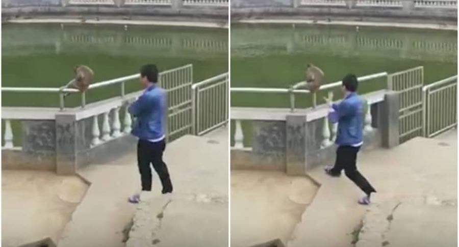 Hombre empuja mono a un estanque.