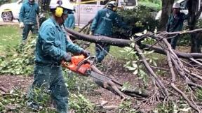 Tala de árboles en Parque El Virrey