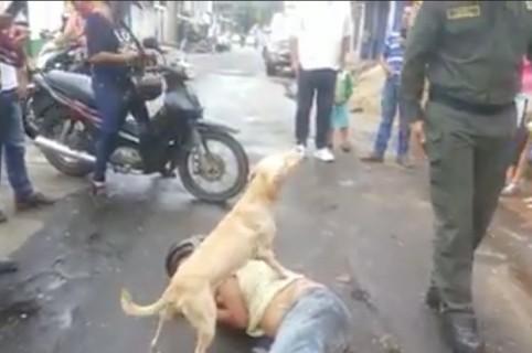 Perro protegiendo a su dueño