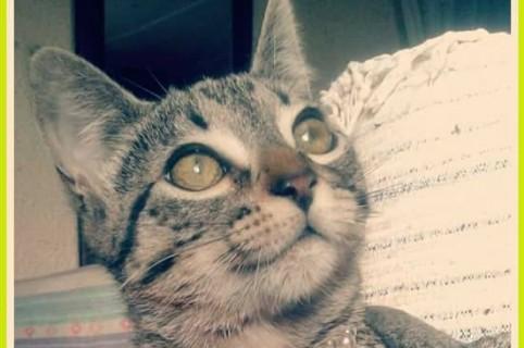 Ella es la gata llamada Milagros
