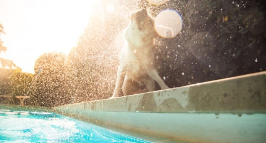 Perro en una piscina.