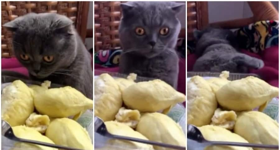 Gato huele fruta apestosa.