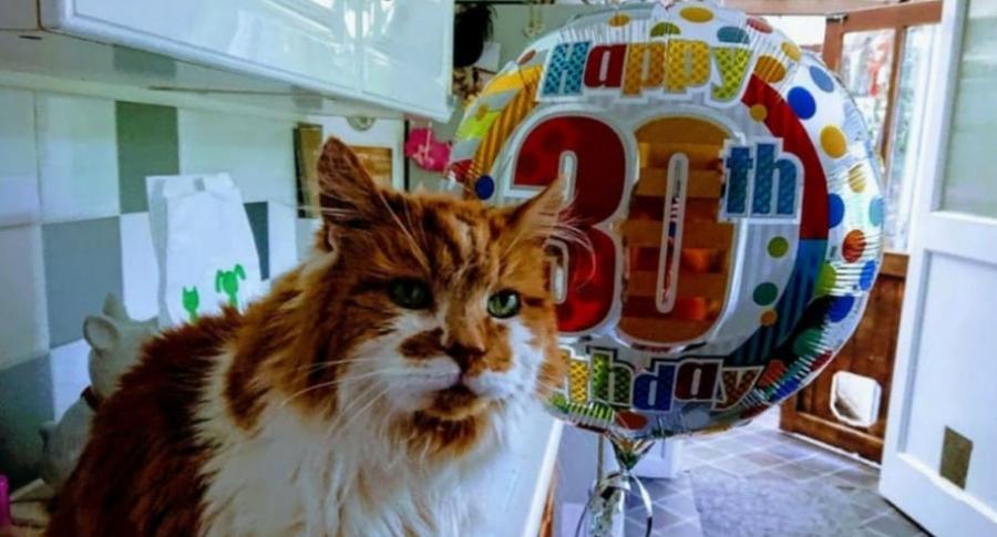 Gato considerado el más viejo del mundo.