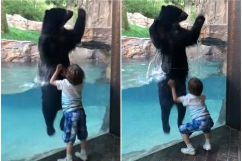 Oso salta con un niño.