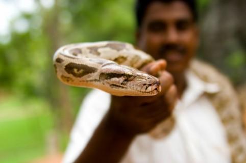 Hombre con una serpiente.