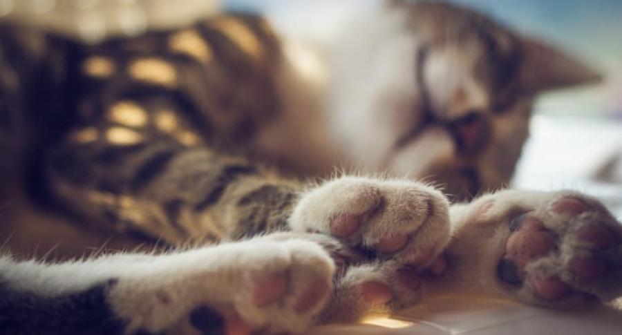 Gato acostado.
