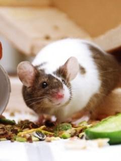 Empleada de famoso restaurante de EE.UU. comparte video de ratones en bolsas de pan