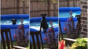 Perro detiene su juego en la piscina.