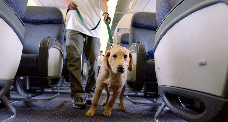 Perro dentro de un avión