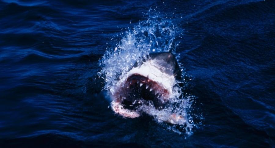 Ataque tiburón