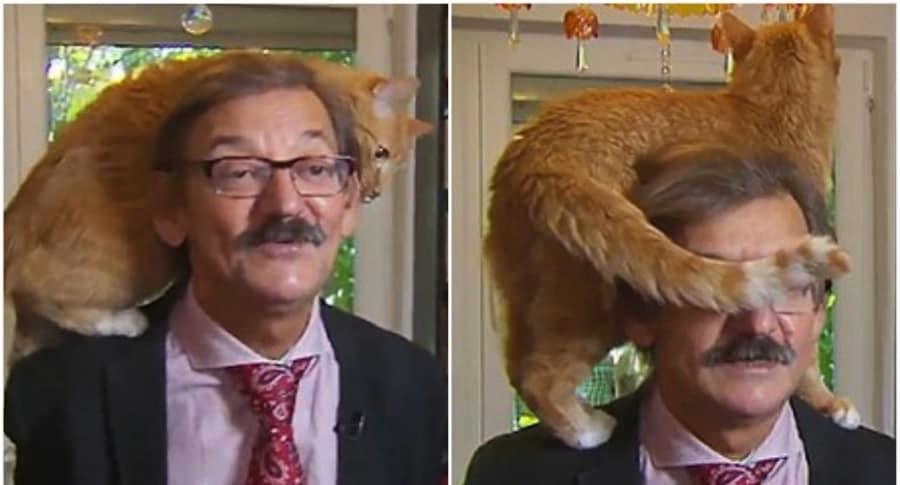 Gato interrumpe entrevista en vivo.